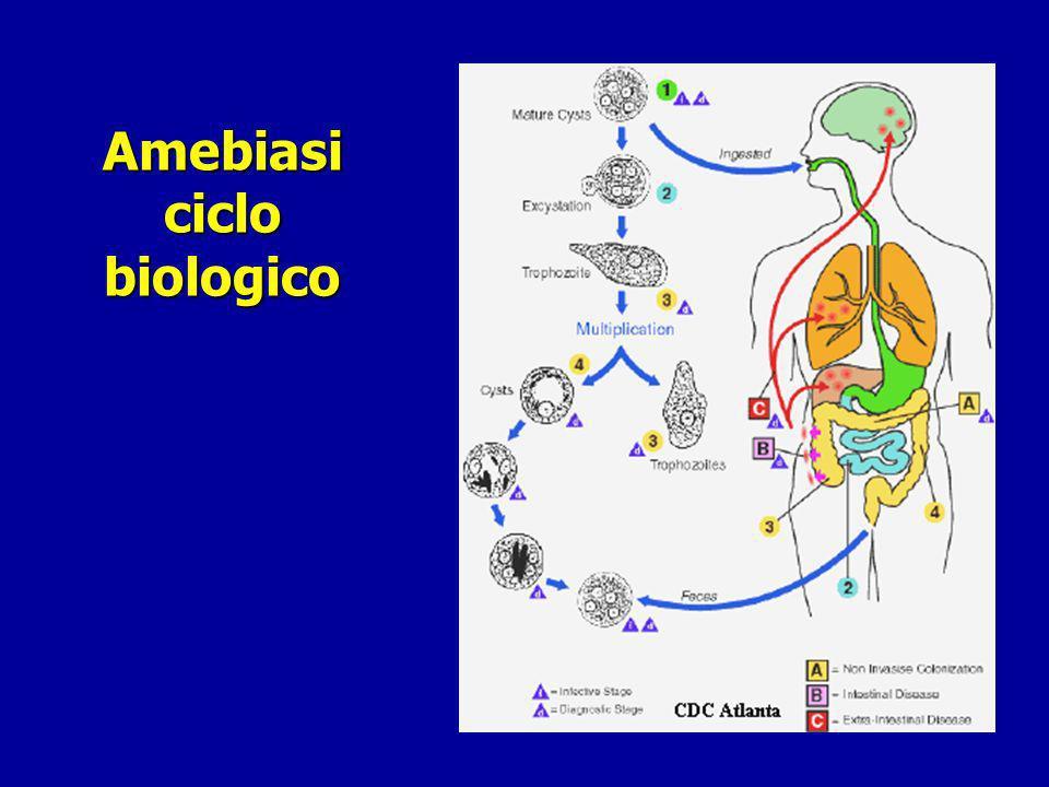 Amebiasi : clinica Amebiasi Extra-Intestinale Ascesso epatico Ascesso epatico In >50% dei casi senza prodromi o anamnesi positiva per forma intestinale In >50% dei casi senza prodromi o anamnesi positiva per forma intestinale Febbre tipo settico, dolore ipocondrio dx, epatomegalia Febbre tipo settico, dolore ipocondrio dx, epatomegalia Leucocitosi neutrofila, VES, Fosf.Alc.
