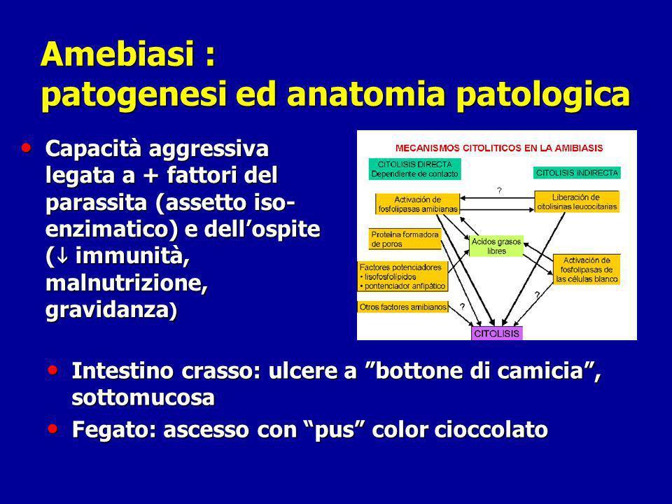 Amebiasi : patogenesi ed anatomia patologica Capacità aggressiva legata a + fattori del parassita (assetto iso- enzimatico) e dellospite ( immunità, m
