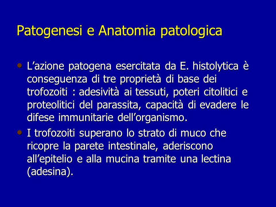 Patogenesi e Anatomia patologica Il contatto con la matrice extracellulare induce nei trofozoiti, attraverso strutture dette amebapori, la liberazione di enzimi proteolitici in grado di degradare il collagene, la laminina, le macromolecole della matrice e le IgA secretorie locali.
