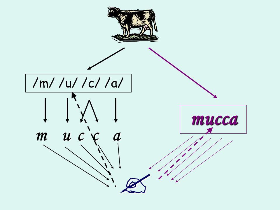 /m/ /u/ /c/ /a/ m u c ca mucca
