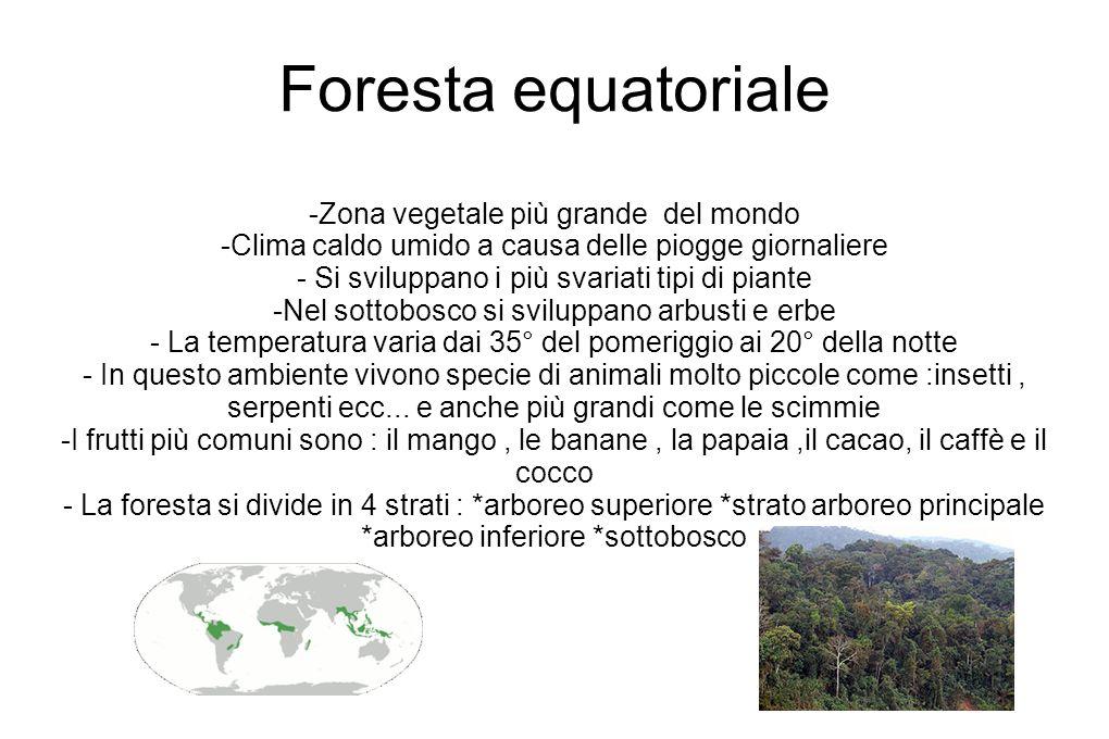 Foresta equatoriale -Zona vegetale più grande del mondo -Clima caldo umido a causa delle piogge giornaliere - Si sviluppano i più svariati tipi di pia