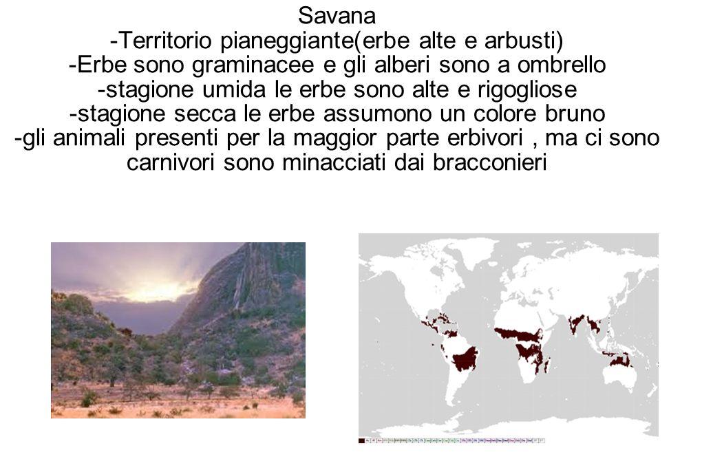 Savana -Territorio pianeggiante(erbe alte e arbusti) -Erbe sono graminacee e gli alberi sono a ombrello -stagione umida le erbe sono alte e rigogliose