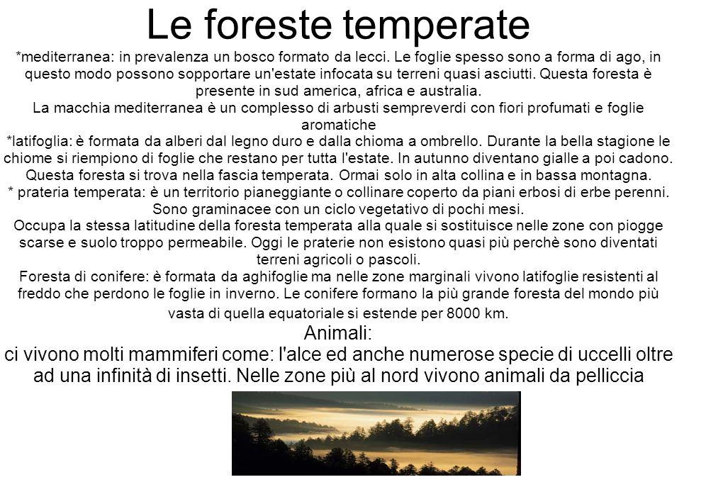 Le foreste temperate *mediterranea: in prevalenza un bosco formato da lecci. Le foglie spesso sono a forma di ago, in questo modo possono sopportare u
