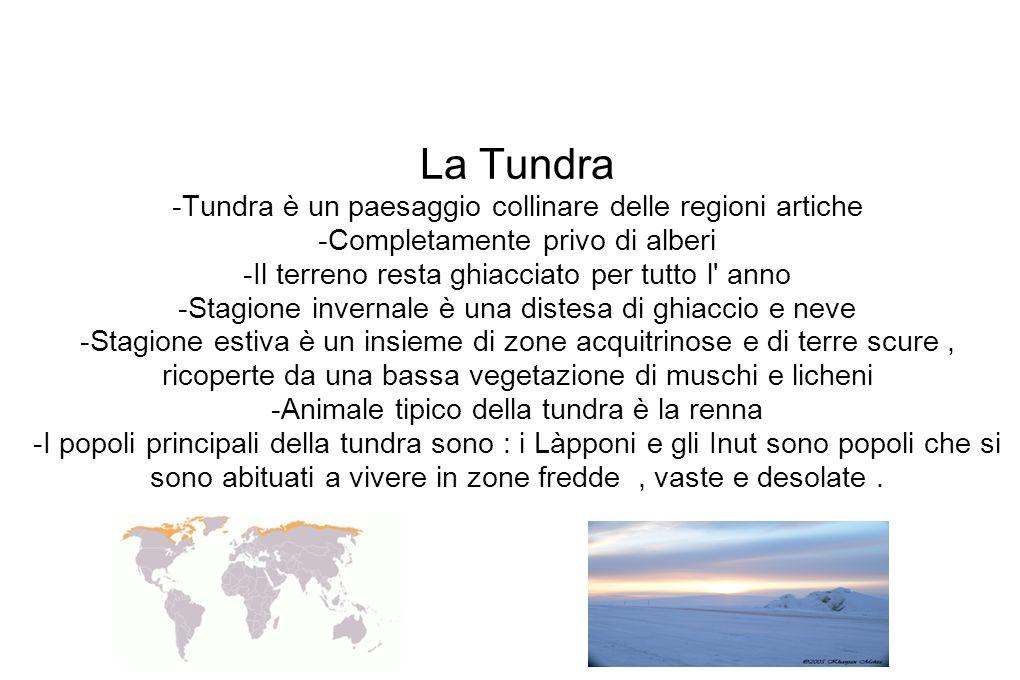 La Tundra -Tundra è un paesaggio collinare delle regioni artiche -Completamente privo di alberi -Il terreno resta ghiacciato per tutto l' anno -Stagio