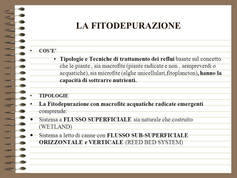 BIOFITODEPURAZIONE COSE Biofitodepurazione: termine coniato @ nel 1994 da E.R.Trevisiol (con P.F.
