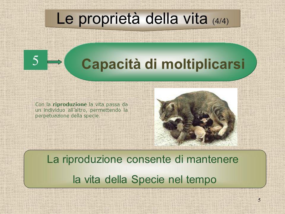 5 5 Capacità di moltiplicarsi La riproduzione consente di mantenere la vita della Specie nel tempo Le proprietà della vita (4/4) Con la riproduzione la vita passa da un individuo allaltro, permettendo la perpetuazione della specie.