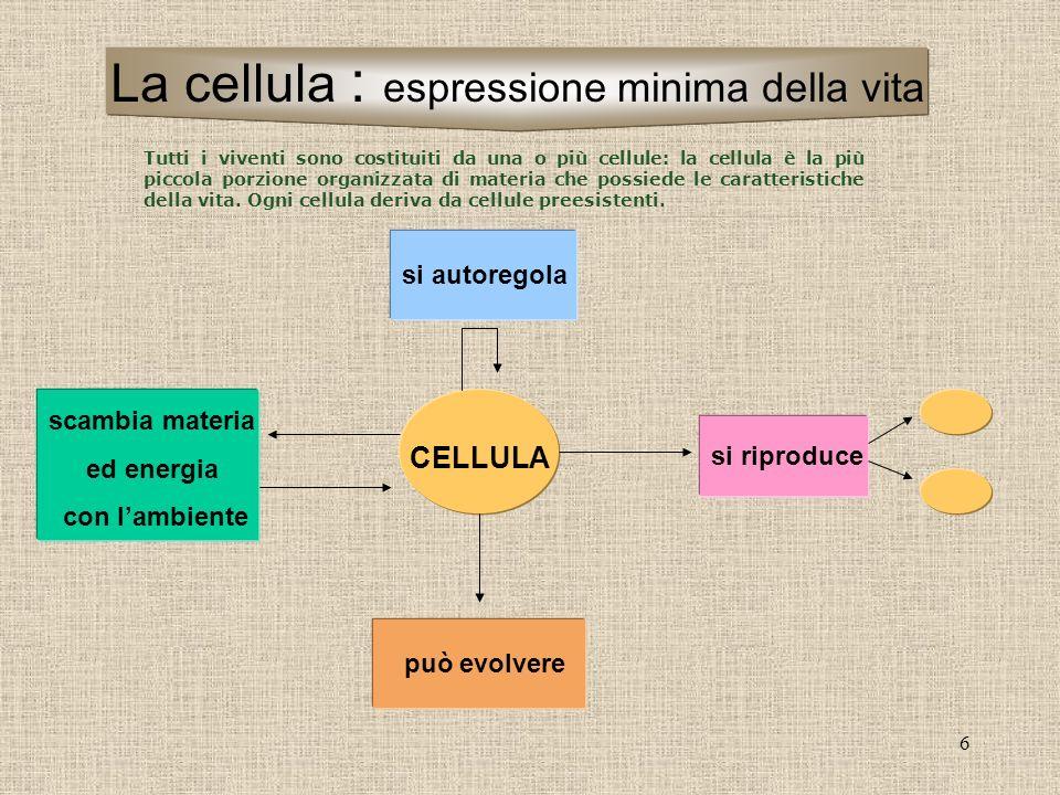 6 CELLULA si riproduce scambia materia ed energia con lambiente si autoregola può evolvere La cellula : espressione minima della vita Tutti i viventi
