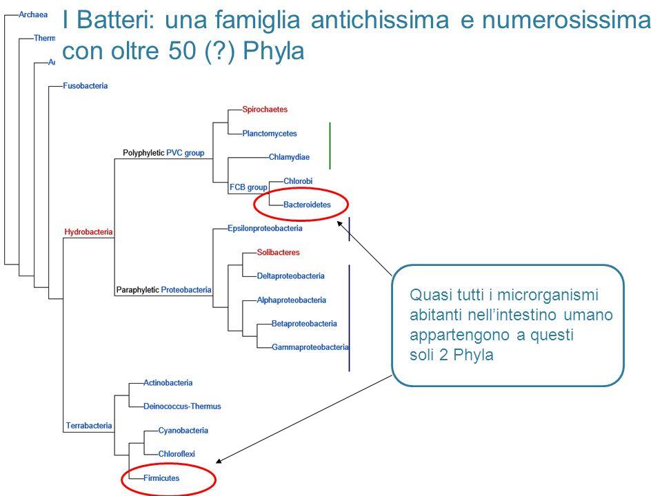 I Batteri: una famiglia antichissima e numerosissima con oltre 50 (?) Phyla Quasi tutti i microrganismi abitanti nellintestino umano appartengono a qu