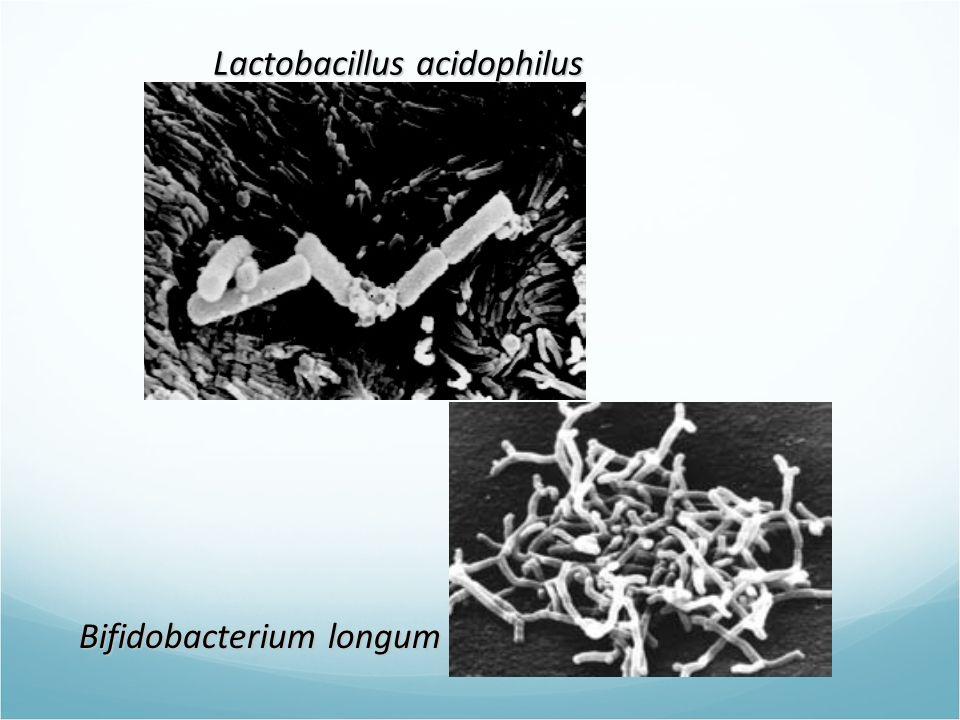 Lactobacillus acidophilus Bifidobacterium longum
