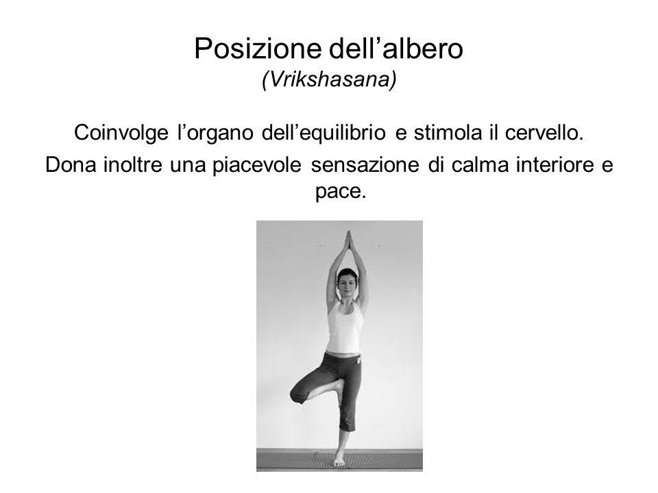 Posizione dellalbero (Vrikshasana) Coinvolge lorgano dellequilibrio e stimola il cervello. Dona inoltre una piacevole sensazione di calma interiore e