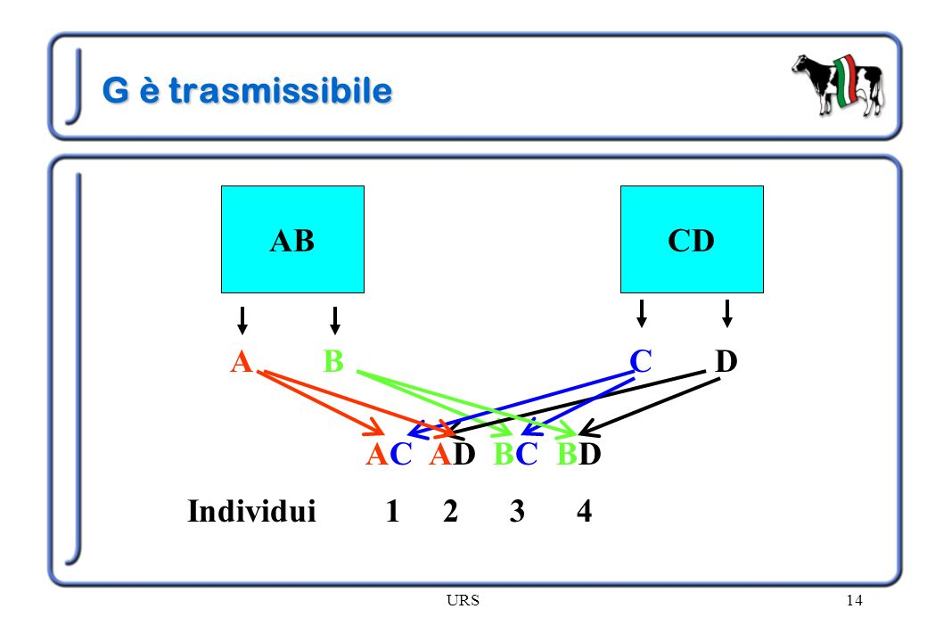 URS14 G è trasmissibile ABCD AC AD BC BD Individui 1 2 3 4 ABDC