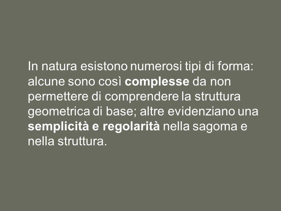 In natura esistono numerosi tipi di forma: alcune sono così complesse da non permettere di comprendere la struttura geometrica di base; altre evidenzi