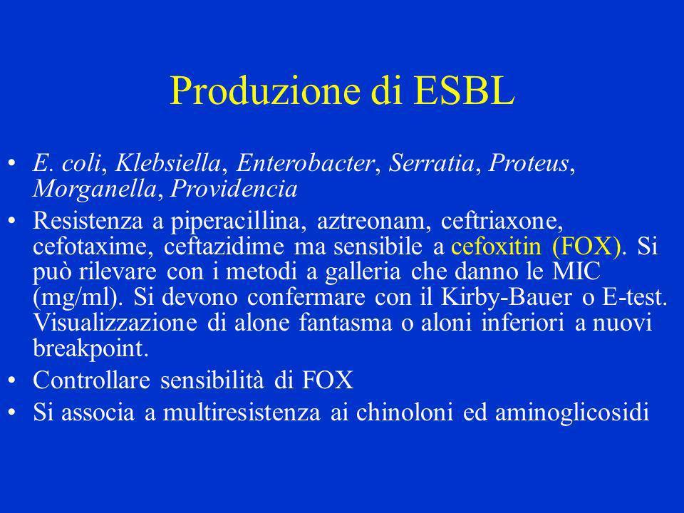 Produzione di ESBL E. coli, Klebsiella, Enterobacter, Serratia, Proteus, Morganella, Providencia Resistenza a piperacillina, aztreonam, ceftriaxone, c
