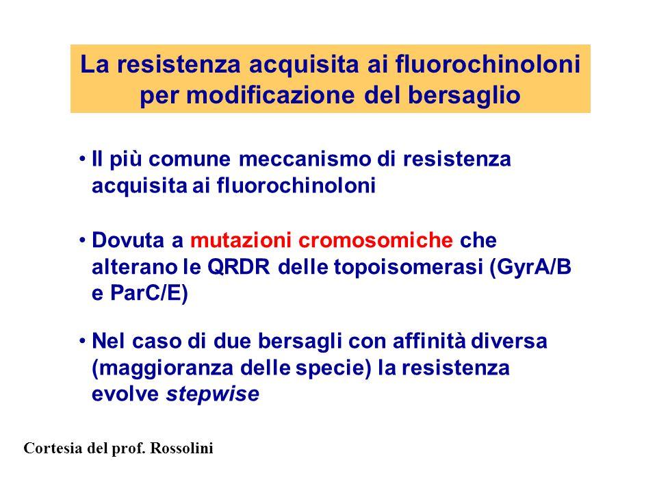 La resistenza acquisita ai fluorochinoloni per modificazione del bersaglio Il più comune meccanismo di resistenza acquisita ai fluorochinoloni Dovuta