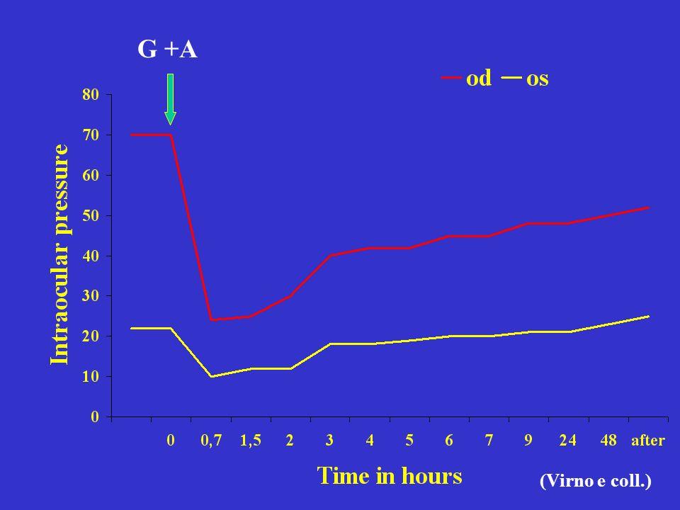 G +A (Virno e coll.)
