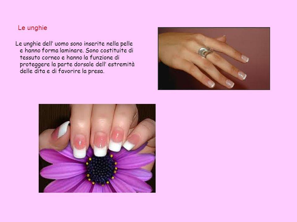 Le unghie Le unghie dell uomo sono inserite nella pelle e hanno forma laminare. Sono costituite di tessuto corneo e hanno la funzione di proteggere la