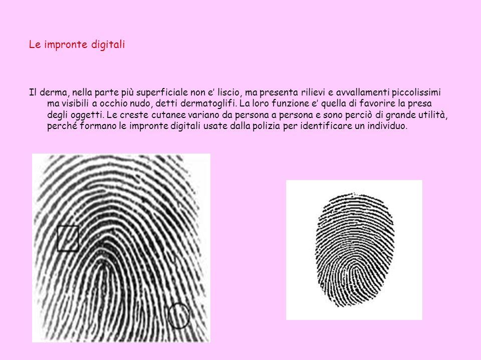 Le impronte digitali Il derma, nella parte più superficiale non e liscio, ma presenta rilievi e avvallamenti piccolissimi ma visibili a occhio nudo, detti dermatoglifi.
