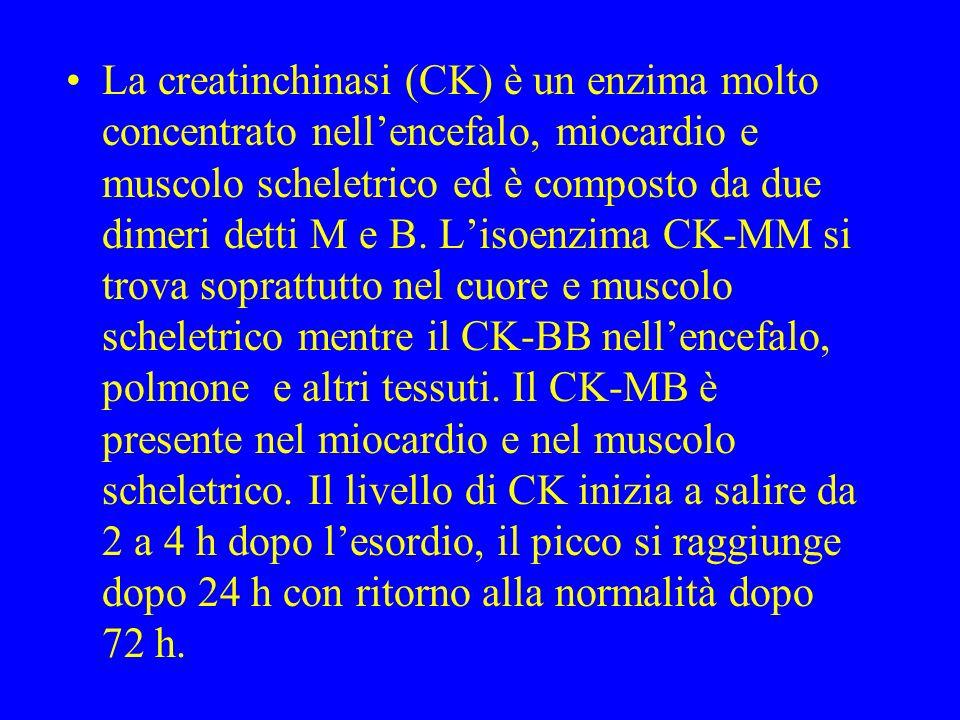 La creatinchinasi (CK) è un enzima molto concentrato nellencefalo, miocardio e muscolo scheletrico ed è composto da due dimeri detti M e B. Lisoenzima
