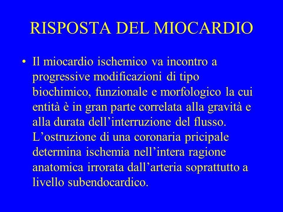 RISPOSTA DEL MIOCARDIO Il miocardio ischemico va incontro a progressive modificazioni di tipo biochimico, funzionale e morfologico la cui entità è in