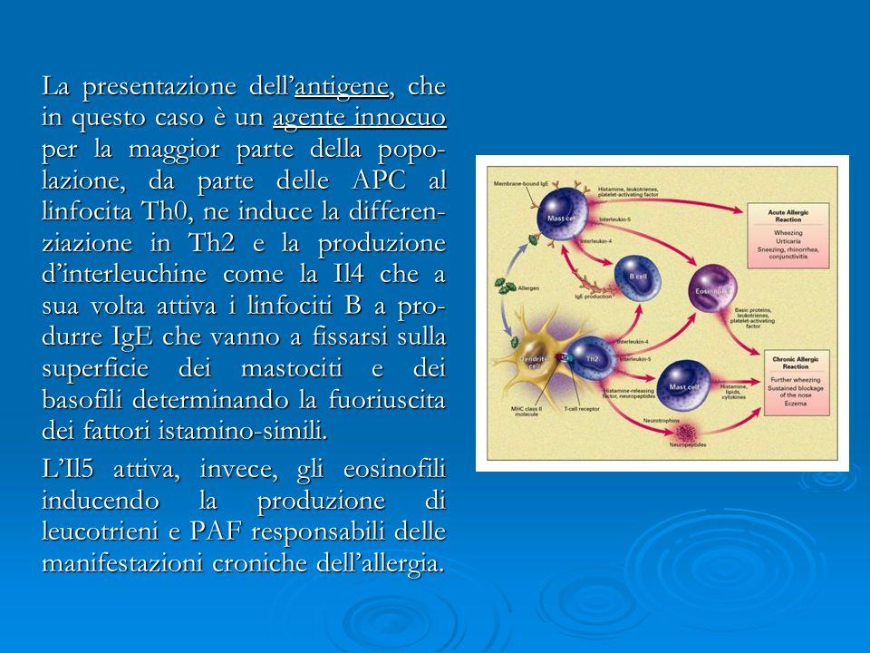 La presentazione dellantigene, che in questo caso è un agente innocuo per la maggior parte della popo- lazione, da parte delle APC al linfocita Th0, n