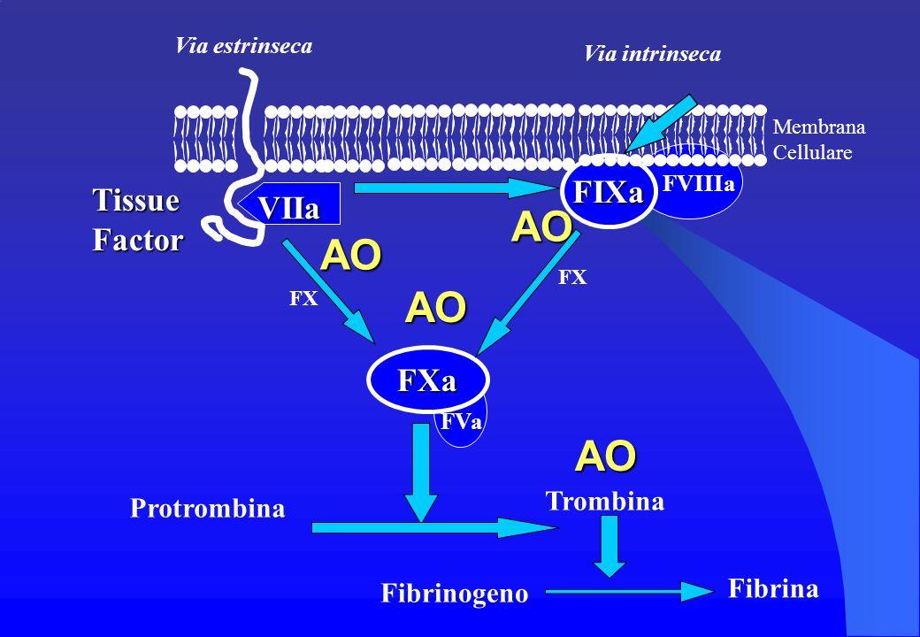 Fibrina VIIa Via estrinseca Via intrinseca FX Protrombina Trombina Fibrinogeno FIXa FVIIIa FXa FVa FX Membrana Cellulare Tissue Factor AO AOAOAO