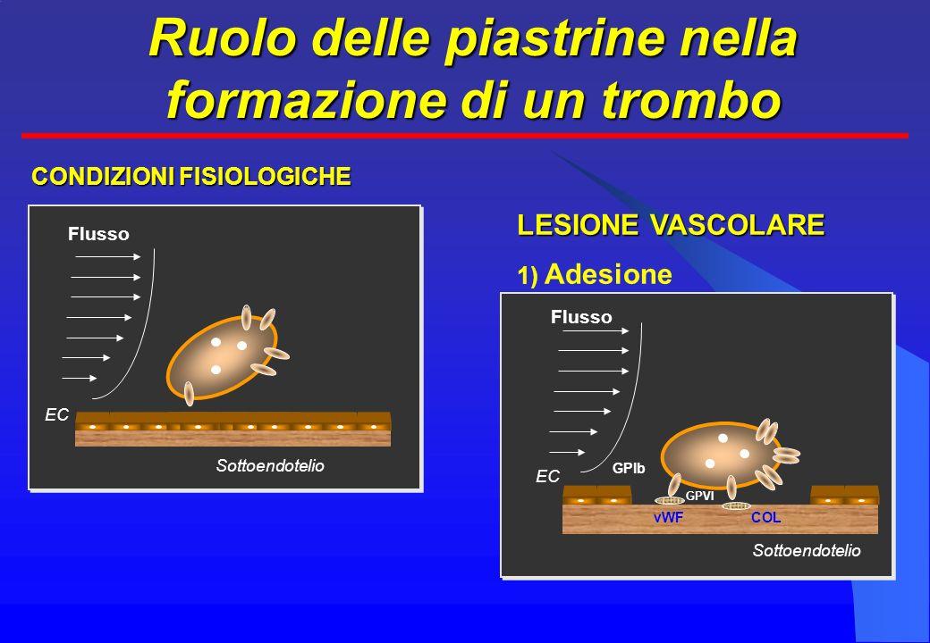 Ruolo delle piastrine nella formazione di un trombo EC Sottoendotelio Flusso EC Sottoendotelio GPIb GPVI vWFCOL LESIONE VASCOLARE 1) Adesione CONDIZIONI FISIOLOGICHE Flusso EC