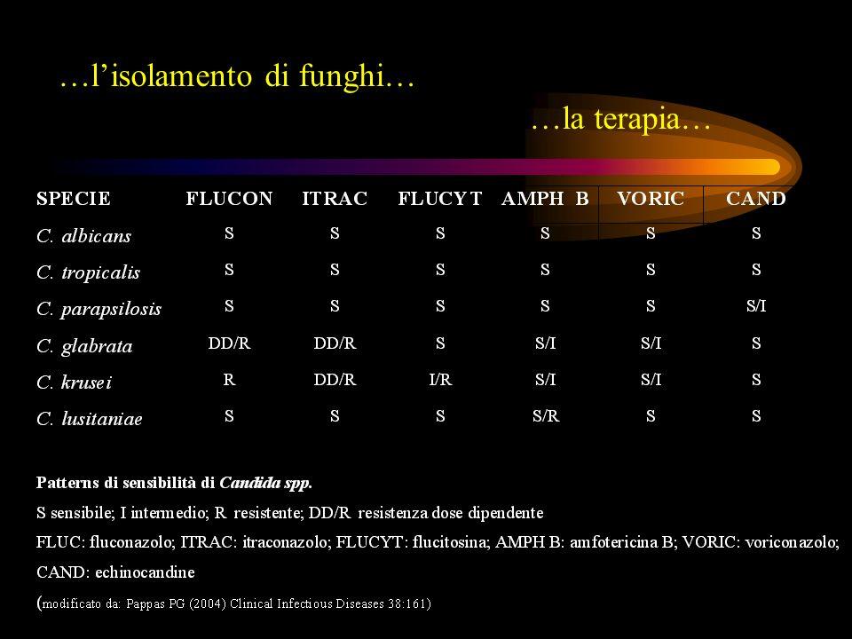 Batteriemie CVC correlate/associate …un quadro settico può essere attribuito allinfezione da CVC quando, in presenza di segni sistemici di infezione, non vi siano apparenti focolai infettivi ad eccezione del catetere medesimo… Garner JS et al (1998) Am J Infect Control 16:128; Mermer LA (2001) CID 32:1249 Infezione CVC correlata: isolamento del medesimo microorganismo sia dal sangue periferico che dal catetere Infezione CVC associata: in assenza di documentazione microbiologica, il catetere costituisce lunica possibile sorgente dellinfezione ed è in uso nelle 48 ore precedenti linsorgenza della batteriemia Mermer LA (2001) CID 32:1249