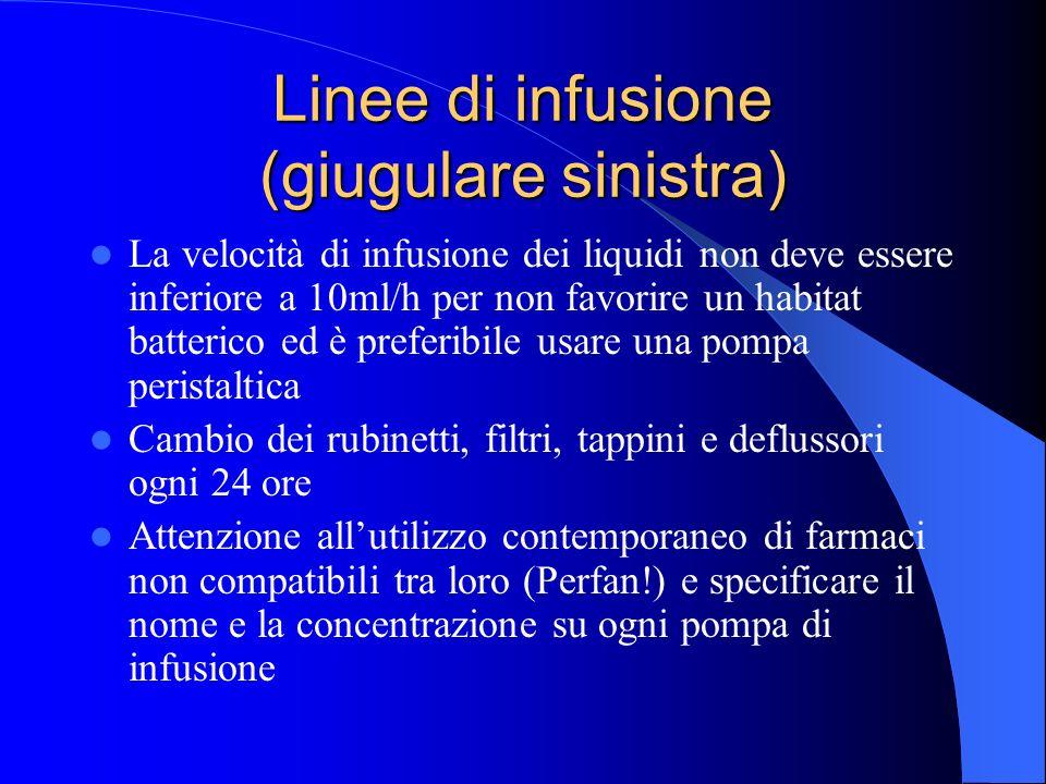Linee di infusione (giugulare sinistra) La velocità di infusione dei liquidi non deve essere inferiore a 10ml/h per non favorire un habitat batterico