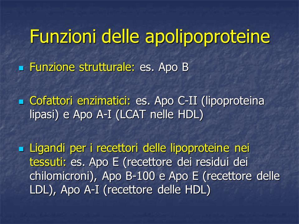 Funzioni delle apolipoproteine Funzione strutturale: es. Apo B Funzione strutturale: es. Apo B Cofattori enzimatici: es. Apo C-II (lipoproteina lipasi