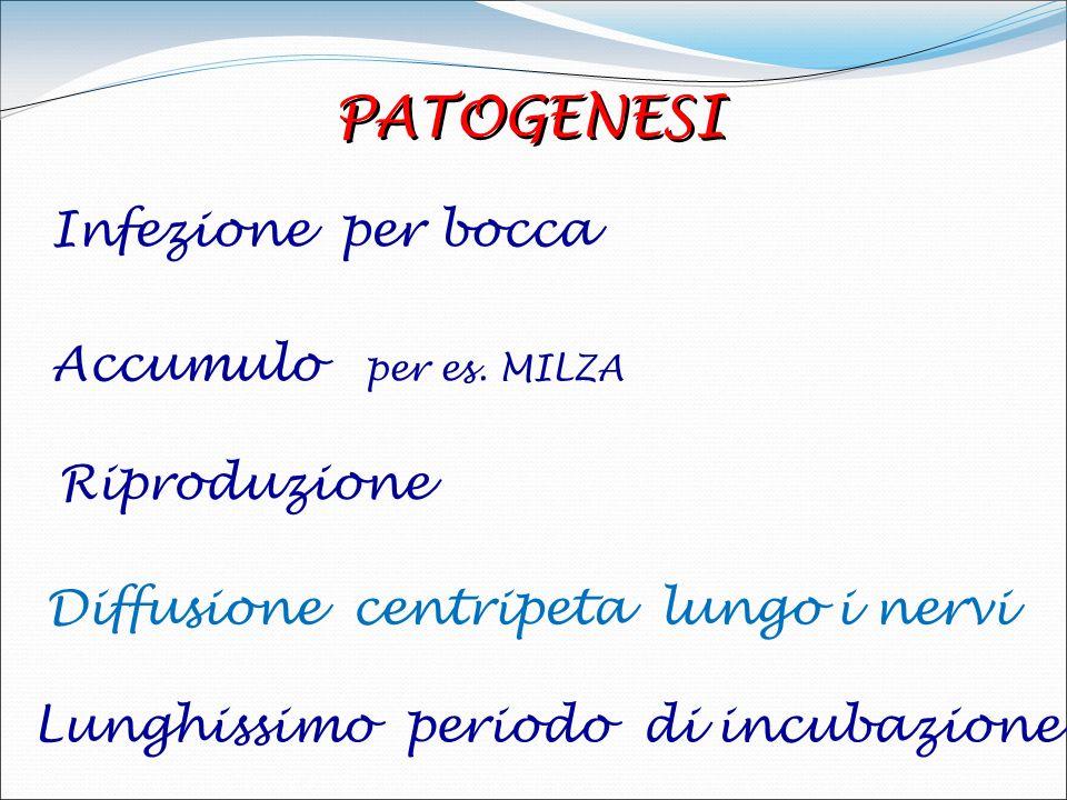 TSE ANIMALI Encefalopatia spongiforme : bovina BSE visone TME felina FSE Chronic wasting disease CWD Scrapie Encefalopatia spongiforme : bovina BSE vi