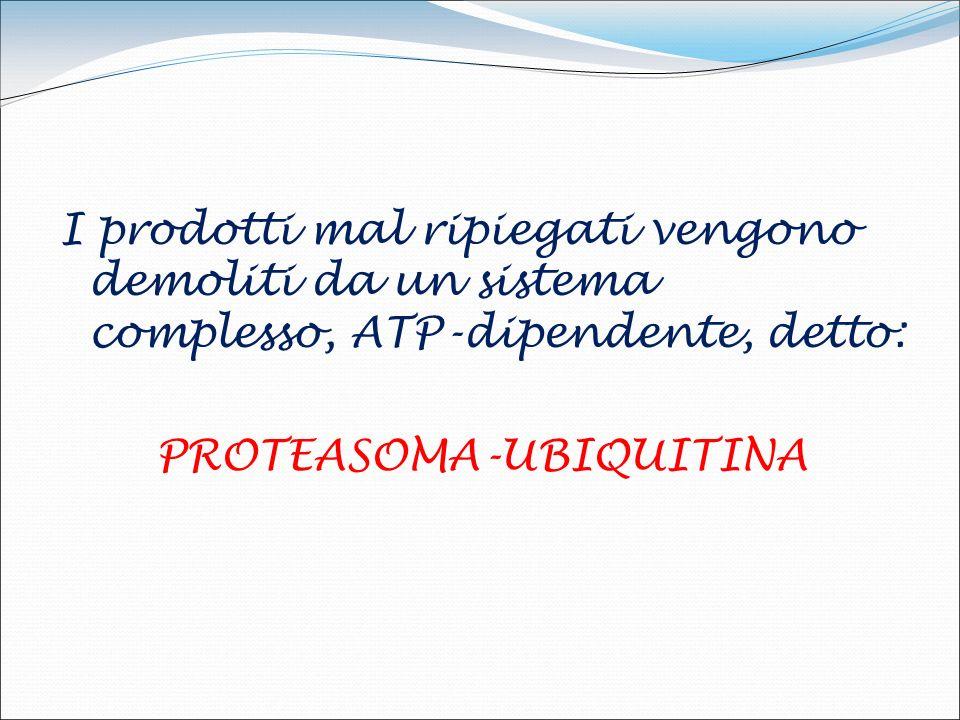 I prodotti mal ripiegati vengono demoliti da un sistema complesso, ATP-dipendente, detto: PROTEASOMA-UBIQUITINA