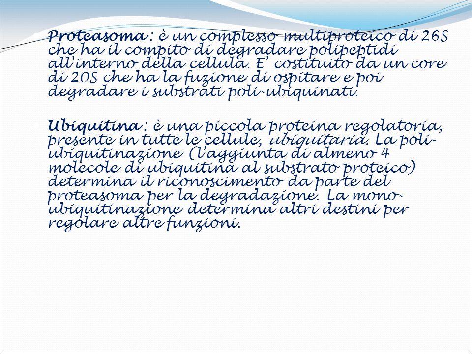 TSE UMANE KURU Iatrogena Iatrogena Sporadica Sporadica Familiare Familiare Iatrogena Iatrogena Sporadica Sporadica Familiare Familiare INSONNIA FATALE FAMILIARE (IFF) CREUTZFELDT-JAKOB DISEASE (CJD) :