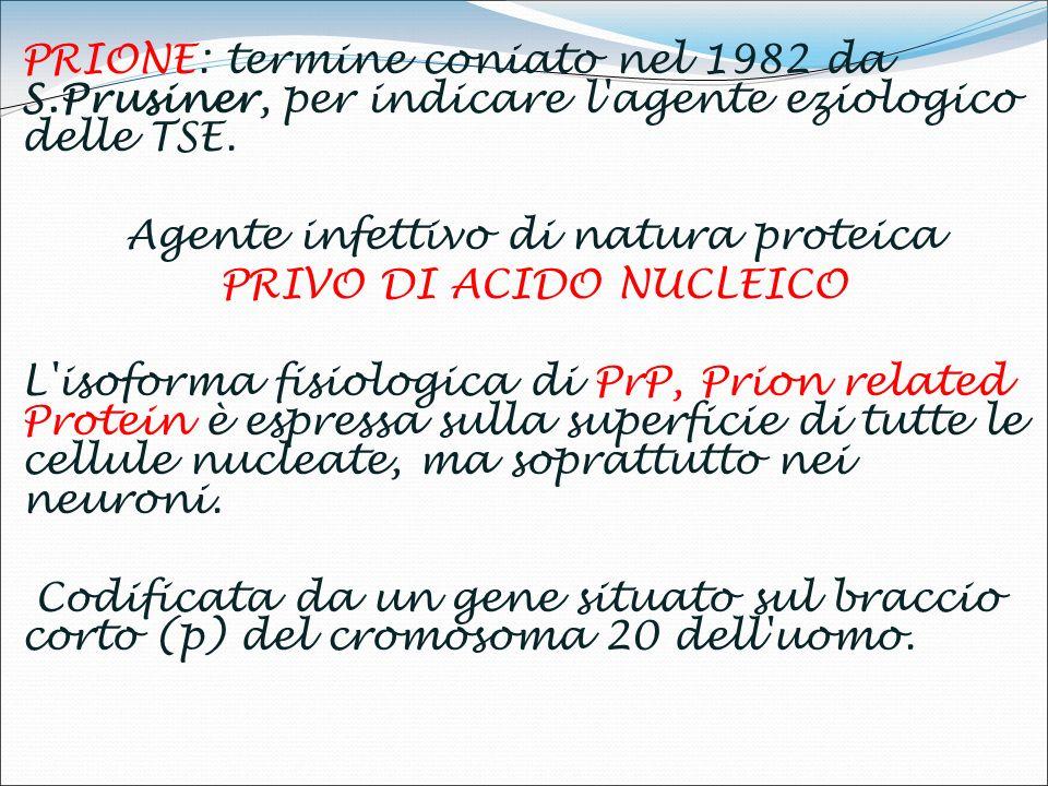 PRIONE: termine coniato nel 1982 da S.Prusiner, per indicare l agente eziologico delle TSE.