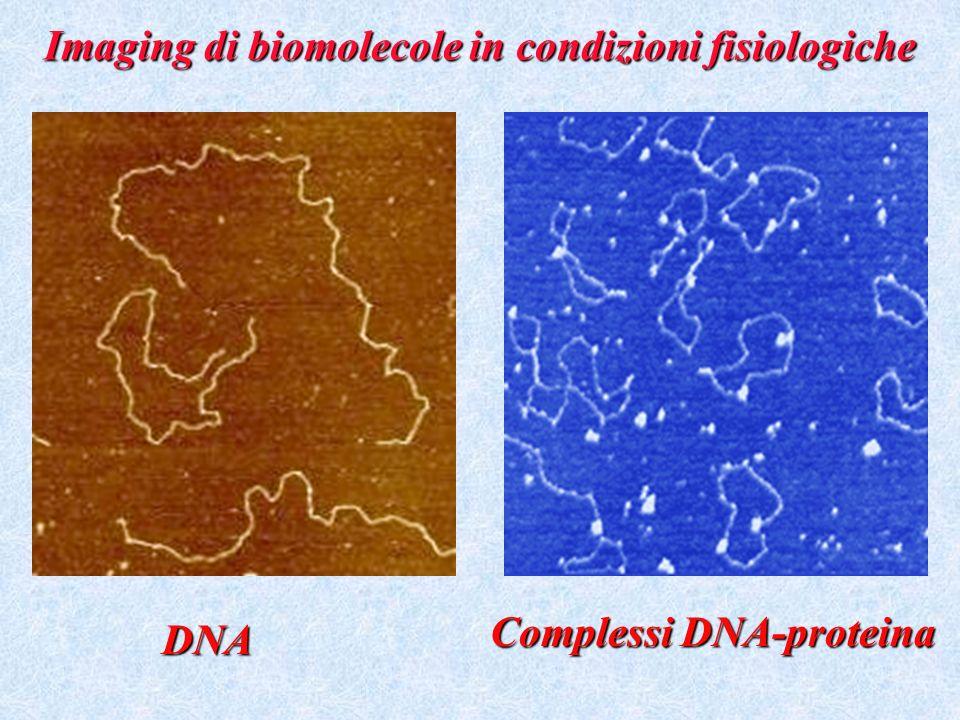 Imaging di biomolecole in condizioni fisiologiche DNA Complessi DNA-proteina