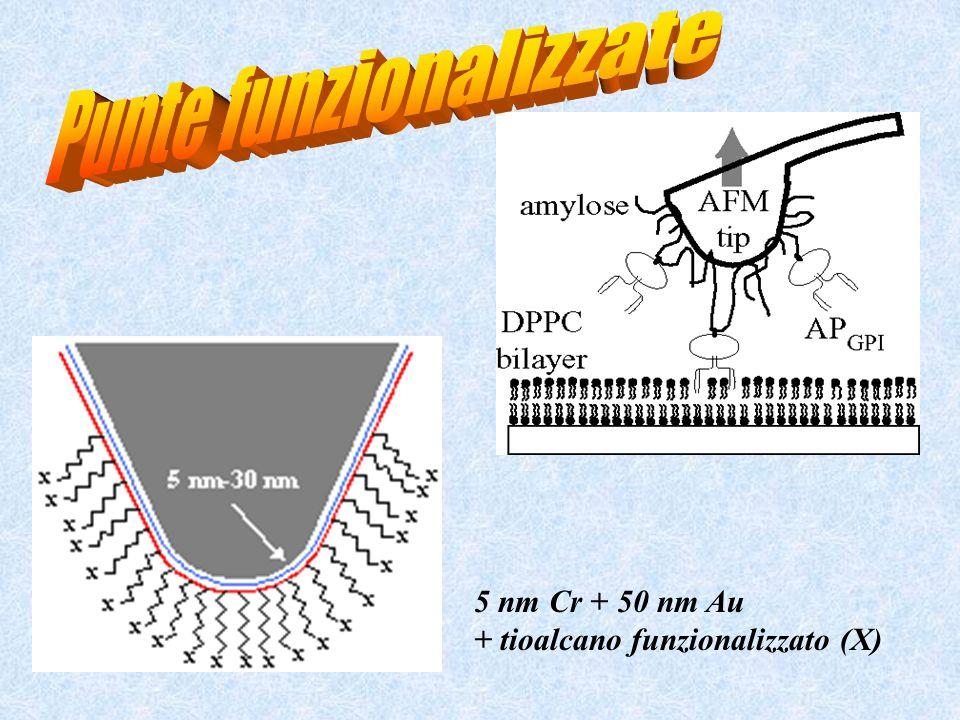 5 nm Cr + 50 nm Au + tioalcano funzionalizzato (X)