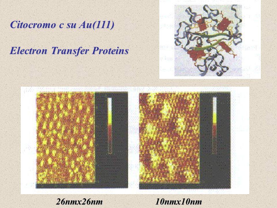Citocromo c su Au(111) Electron Transfer Proteins 26nmx26nm10nmx10nm