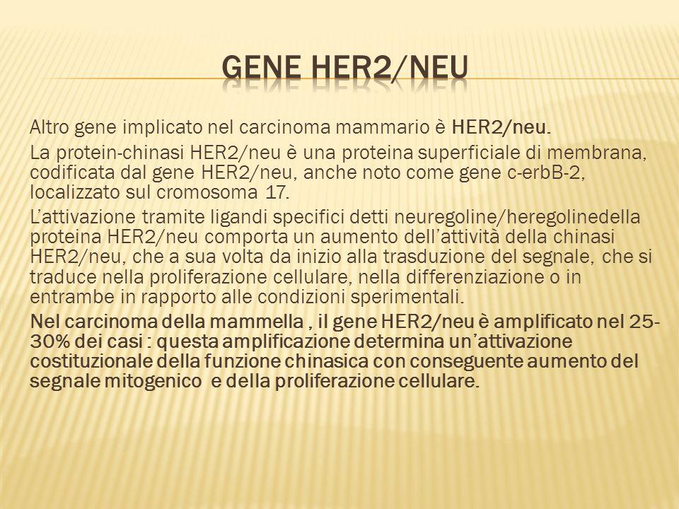 Altro gene implicato nel carcinoma mammario è HER2/neu.