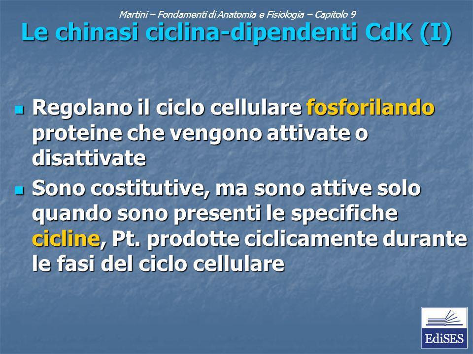 Martini – Fondamenti di Anatomia e Fisiologia – Capitolo 9 Le chinasi ciclina-dipendenti CdK (I) Regolano il ciclo cellulare fosforilando proteine che