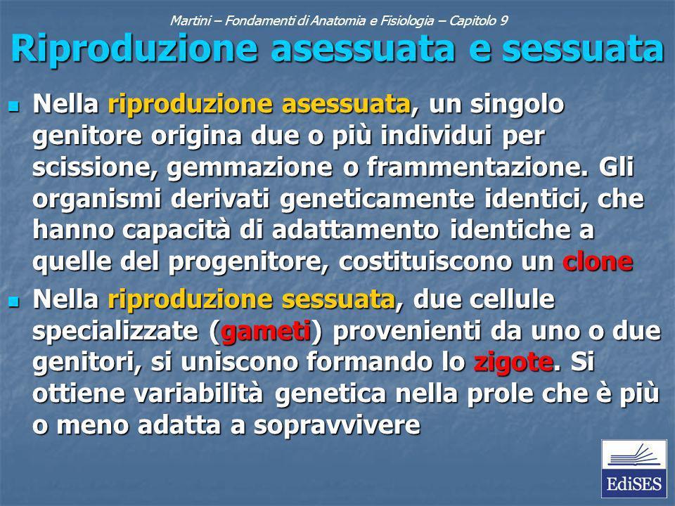 Martini – Fondamenti di Anatomia e Fisiologia – Capitolo 9 Riproduzione asessuata e sessuata Nella riproduzione asessuata, un singolo genitore origina
