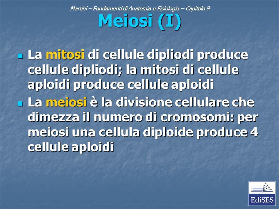 Martini – Fondamenti di Anatomia e Fisiologia – Capitolo 9 Meiosi (I) La mitosi di cellule dipliodi produce cellule dipliodi; la mitosi di cellule aploidi produce cellule aploidi La mitosi di cellule dipliodi produce cellule dipliodi; la mitosi di cellule aploidi produce cellule aploidi La meiosi è la divisione cellulare che dimezza il numero di cromosomi: per meiosi una cellula diploide produce 4 cellule aploidi La meiosi è la divisione cellulare che dimezza il numero di cromosomi: per meiosi una cellula diploide produce 4 cellule aploidi