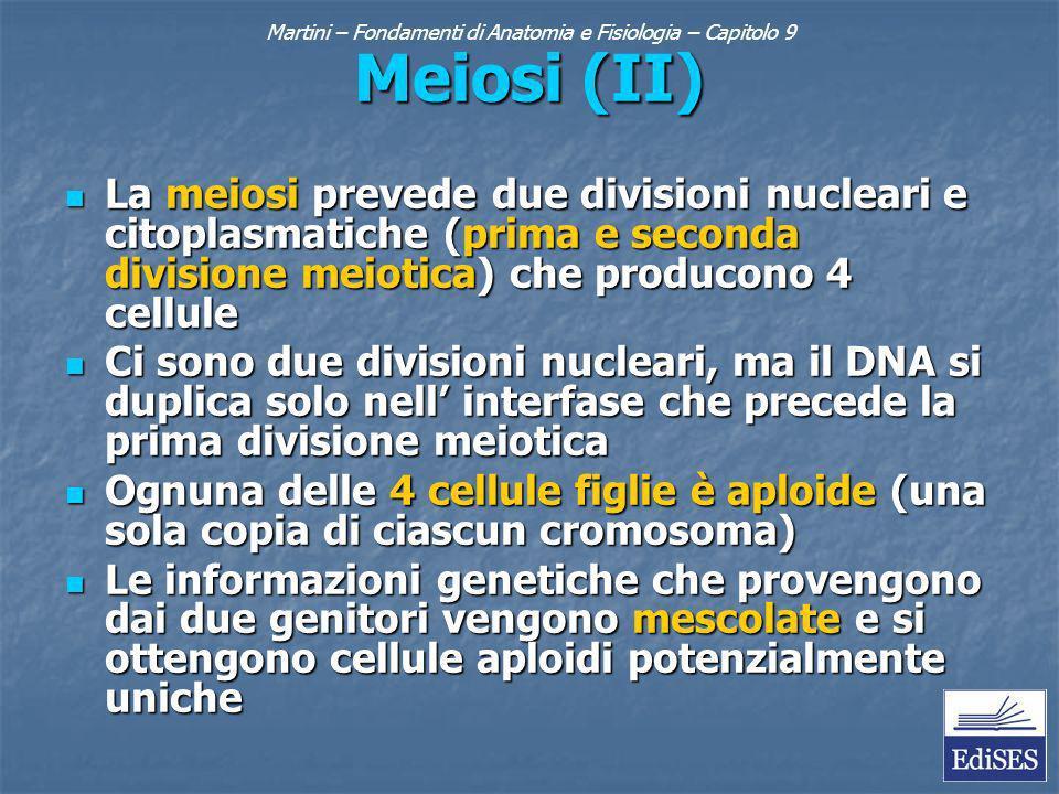 Martini – Fondamenti di Anatomia e Fisiologia – Capitolo 9 Meiosi (II) La meiosi prevede due divisioni nucleari e citoplasmatiche (prima e seconda divisione meiotica) che producono 4 cellule La meiosi prevede due divisioni nucleari e citoplasmatiche (prima e seconda divisione meiotica) che producono 4 cellule Ci sono due divisioni nucleari, ma il DNA si duplica solo nell interfase che precede la prima divisione meiotica Ci sono due divisioni nucleari, ma il DNA si duplica solo nell interfase che precede la prima divisione meiotica Ognuna delle 4 cellule figlie è aploide (una sola copia di ciascun cromosoma) Ognuna delle 4 cellule figlie è aploide (una sola copia di ciascun cromosoma) Le informazioni genetiche che provengono dai due genitori vengono mescolate e si ottengono cellule aploidi potenzialmente uniche Le informazioni genetiche che provengono dai due genitori vengono mescolate e si ottengono cellule aploidi potenzialmente uniche