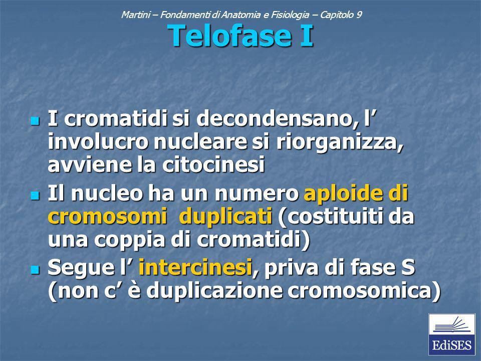 Martini – Fondamenti di Anatomia e Fisiologia – Capitolo 9 Telofase I I cromatidi si decondensano, l involucro nucleare si riorganizza, avviene la citocinesi I cromatidi si decondensano, l involucro nucleare si riorganizza, avviene la citocinesi Il nucleo ha un numero aploide di cromosomi duplicati (costituiti da una coppia di cromatidi) Il nucleo ha un numero aploide di cromosomi duplicati (costituiti da una coppia di cromatidi) Segue l intercinesi, priva di fase S (non c è duplicazione cromosomica) Segue l intercinesi, priva di fase S (non c è duplicazione cromosomica)