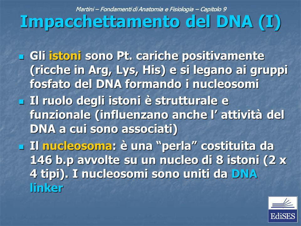 Martini – Fondamenti di Anatomia e Fisiologia – Capitolo 9 Impacchettamento del DNA (II) Il nucleosoma impacchettato si ha quando gli istoni H1 (un quinto tipo) si associano al DNA linker avvicinando i nucleosomi adiacenti Il nucleosoma impacchettato si ha quando gli istoni H1 (un quinto tipo) si associano al DNA linker avvicinando i nucleosomi adiacenti Nella cromatina decondensata i nucleosomi impacchettati formano anse spiralate tenute insieme dalle Pt.