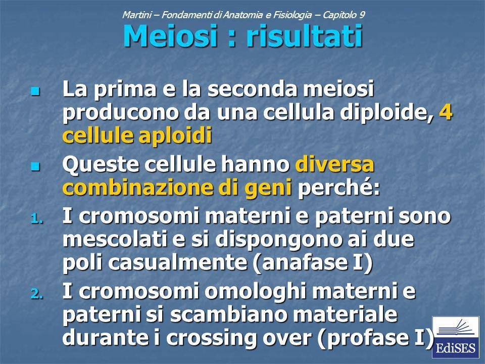 Martini – Fondamenti di Anatomia e Fisiologia – Capitolo 9 Meiosi : risultati La prima e la seconda meiosi producono da una cellula diploide, 4 cellule aploidi La prima e la seconda meiosi producono da una cellula diploide, 4 cellule aploidi Queste cellule hanno diversa combinazione di geni perché: Queste cellule hanno diversa combinazione di geni perché: 1.