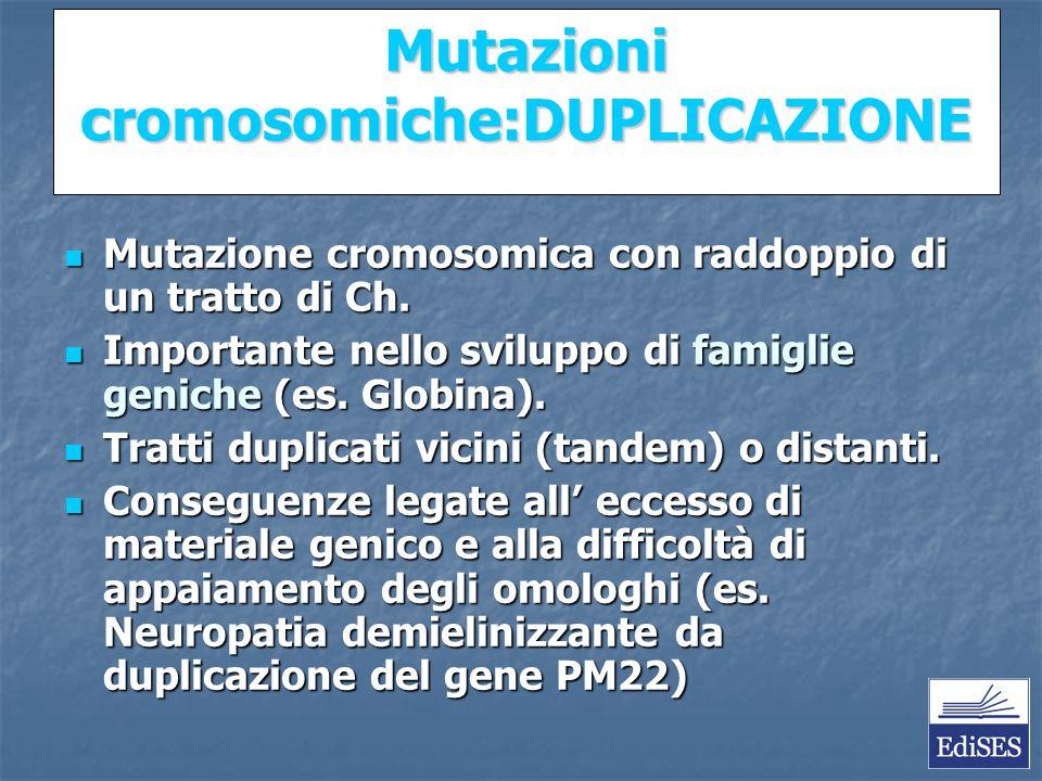 Martini – Fondamenti di Anatomia e Fisiologia – Capitolo 15 Mutazioni cromosomiche:DUPLICAZIONE Mutazione cromosomica con raddoppio di un tratto di Ch.