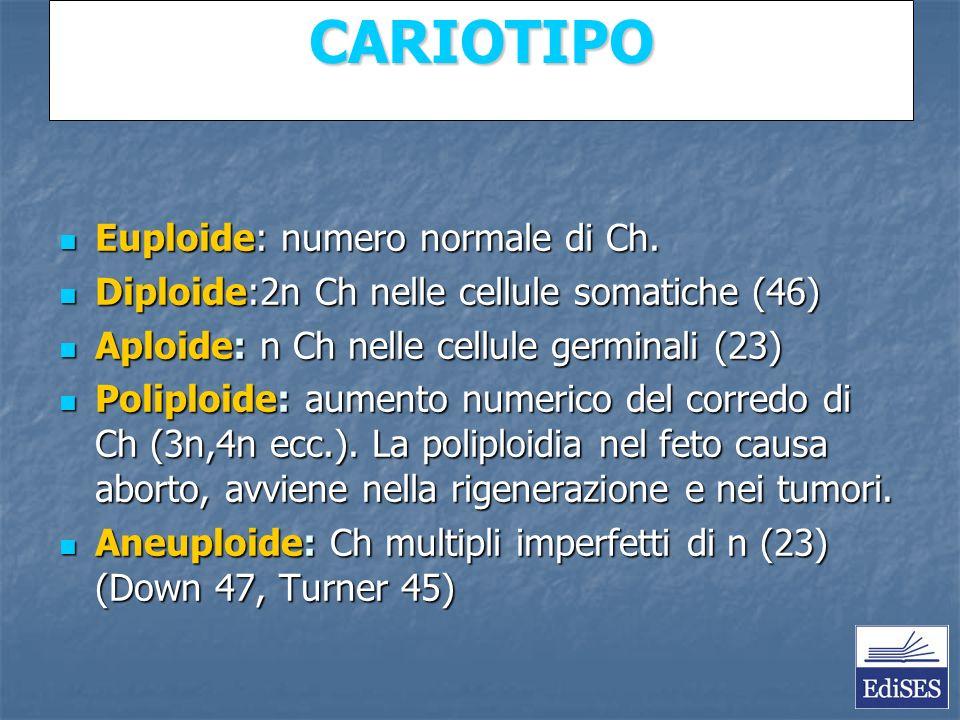 CARIOTIPO Euploide: numero normale di Ch. Euploide: numero normale di Ch.