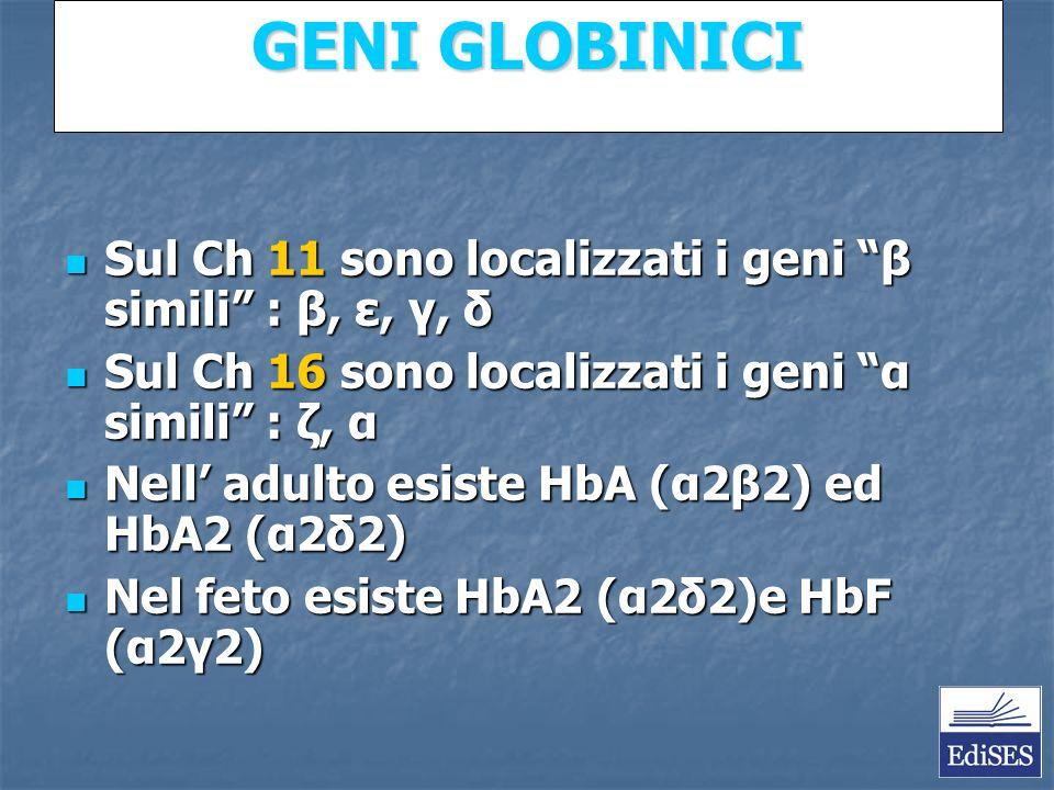 Martini – Fondamenti di Anatomia e Fisiologia – Capitolo 15 GENI GLOBINICI Sul Ch 11 sono localizzati i geni β simili : β, ε, γ, δ Sul Ch 11 sono localizzati i geni β simili : β, ε, γ, δ Sul Ch 16 sono localizzati i geni α simili : ζ, α Sul Ch 16 sono localizzati i geni α simili : ζ, α Nell adulto esiste HbA (α2β2) ed HbA2 (α2δ2) Nell adulto esiste HbA (α2β2) ed HbA2 (α2δ2) Nel feto esiste HbA2 (α2δ2)e HbF (α2γ2) Nel feto esiste HbA2 (α2δ2)e HbF (α2γ2)
