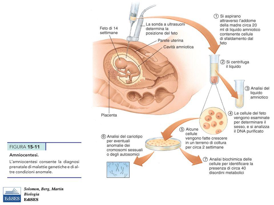 Martini – Fondamenti di Anatomia e Fisiologia – Capitolo 15