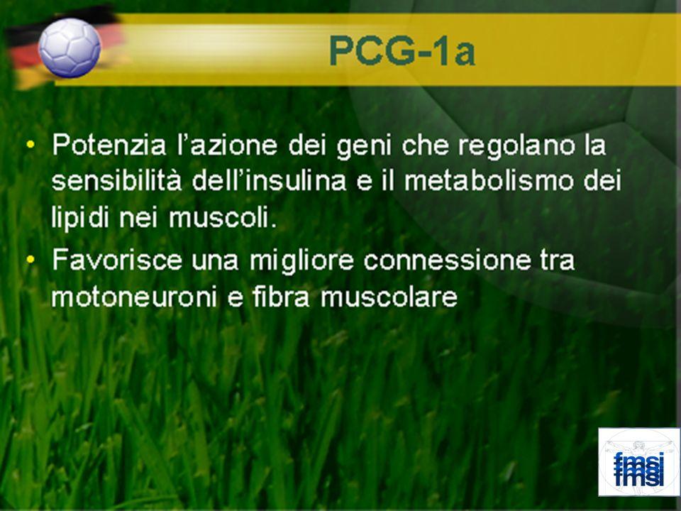 In particolare GnRH(gonadotropin relasing Hormone) Stimola lipofisi Anteriore a produrre LH FSH