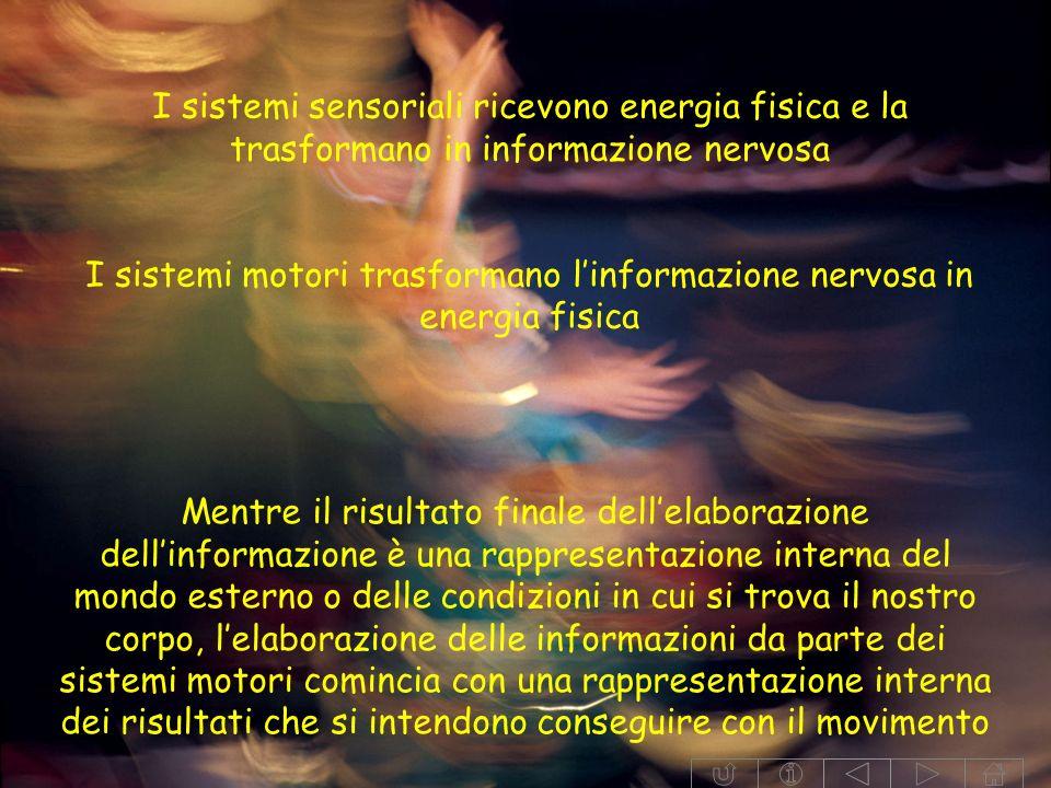 I sistemi sensoriali ricevono energia fisica e la trasformano in informazione nervosa I sistemi motori trasformano linformazione nervosa in energia fisica Mentre il risultato finale dellelaborazione dellinformazione è una rappresentazione interna del mondo esterno o delle condizioni in cui si trova il nostro corpo, lelaborazione delle informazioni da parte dei sistemi motori comincia con una rappresentazione interna dei risultati che si intendono conseguire con il movimento